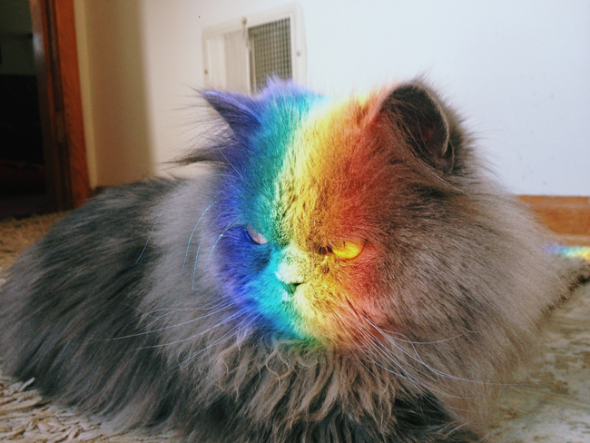 Jody the cat loves to sit in the rainbow colors