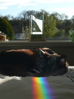 Spectra sundial painting rainbow color on an English kitty